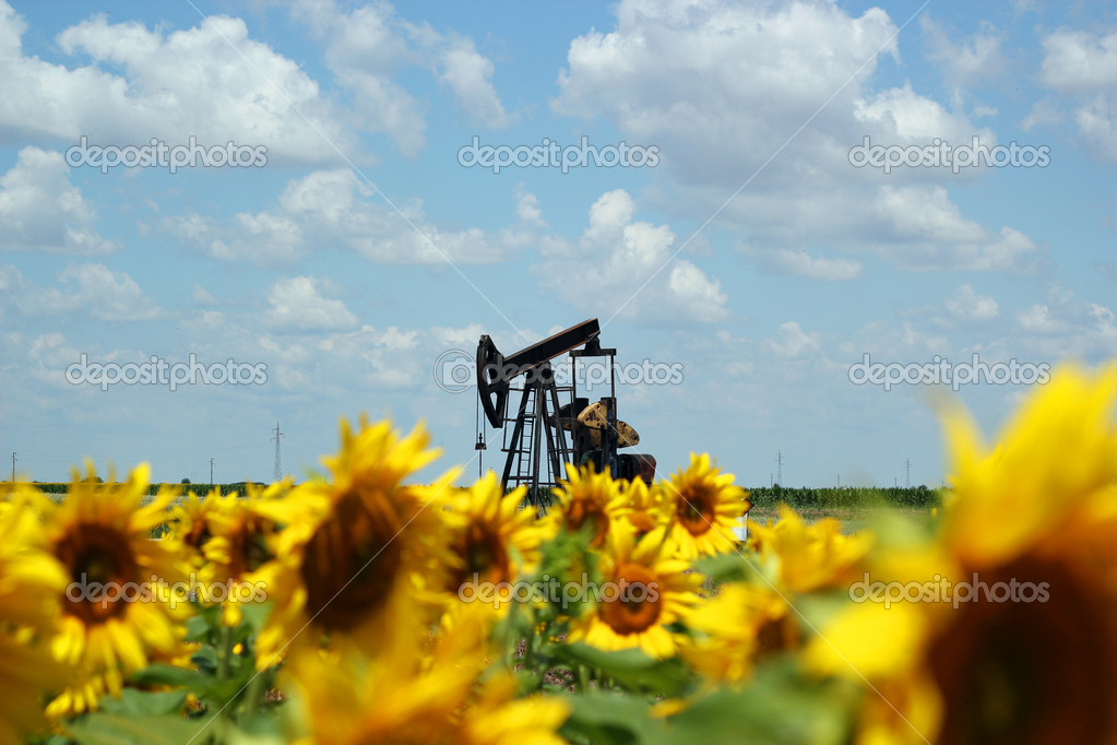 Oil Field Pump Jack In Sunflowers