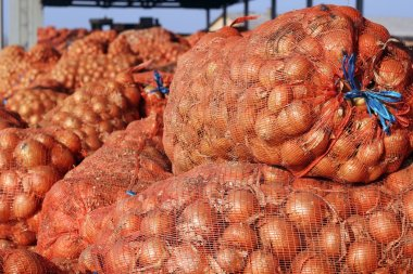 Fresh Onion in Mesh Bag Package