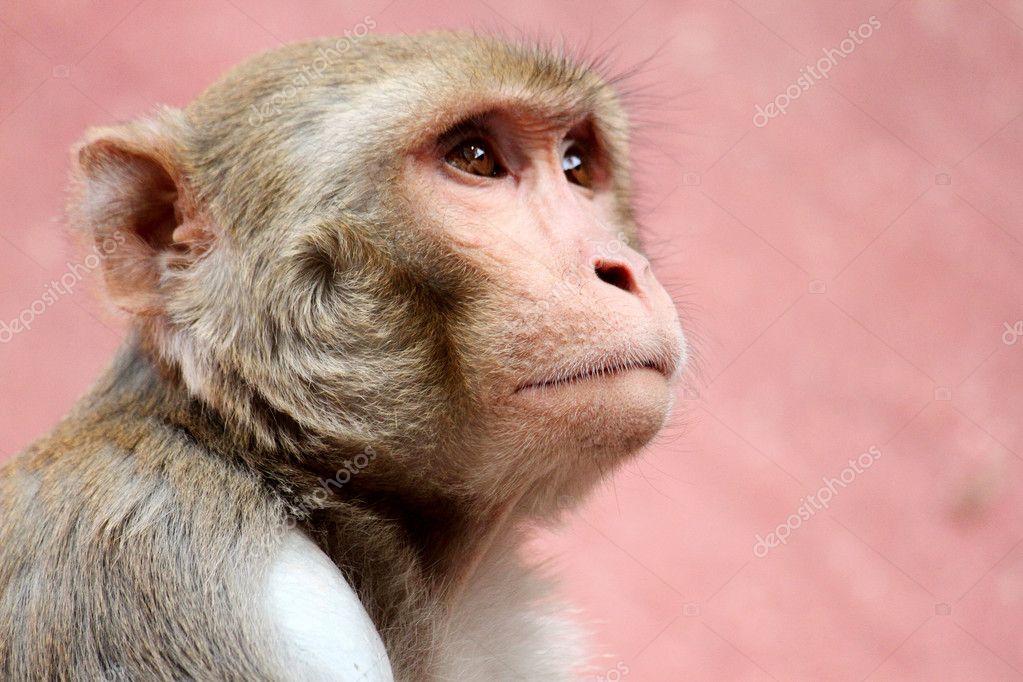 Sad monkey.