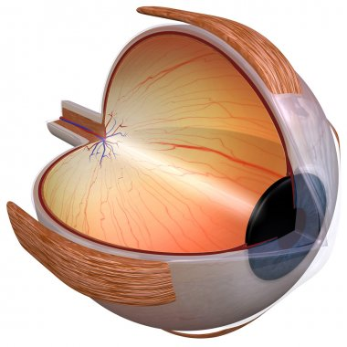 Eye Diagram three quarter view