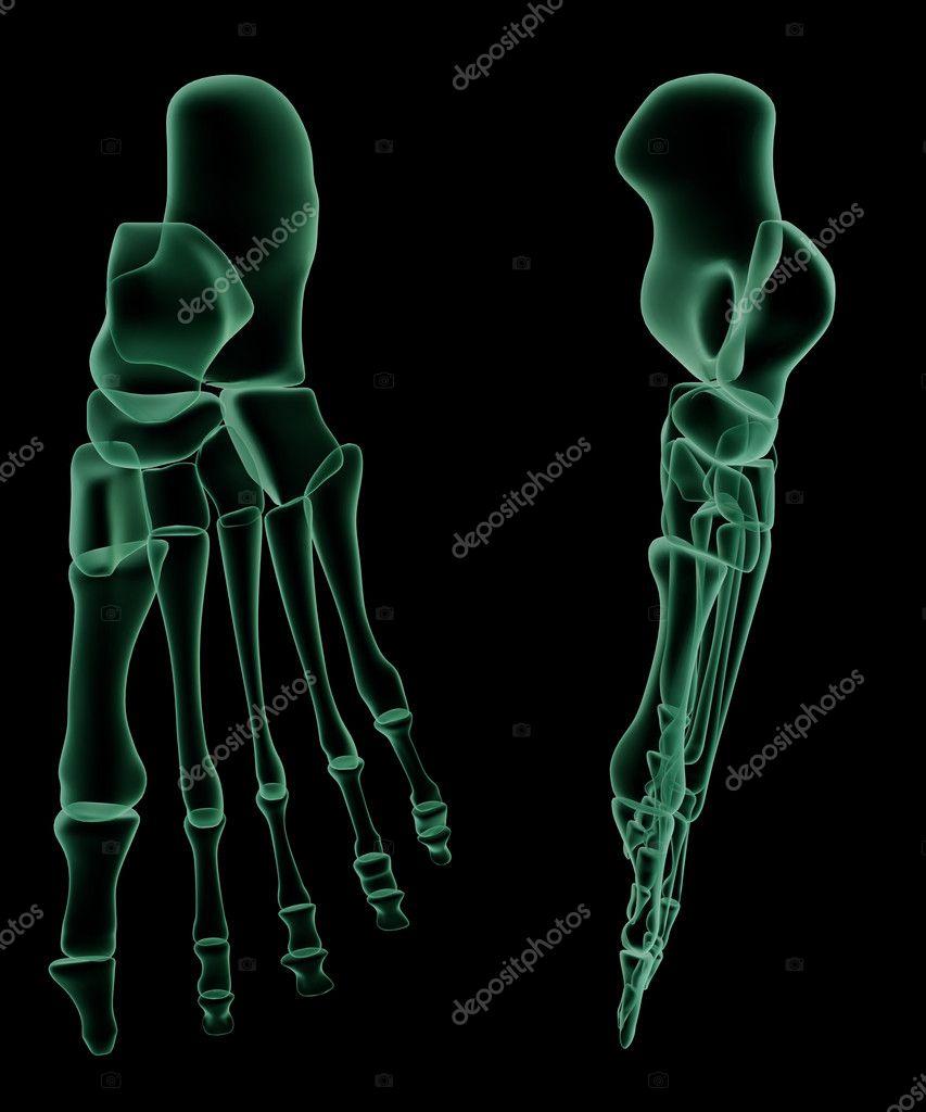 Röntgen Skelett-Struktur des menschlichen Fußes — Stockfoto © shumpc ...