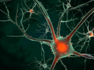 Cell body of a Neuron