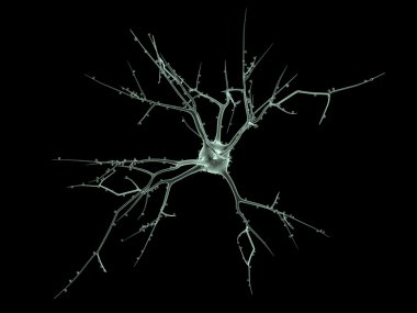 Cell body of two Neurons