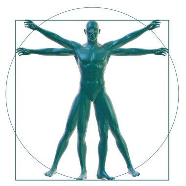 Vitruvian man on white