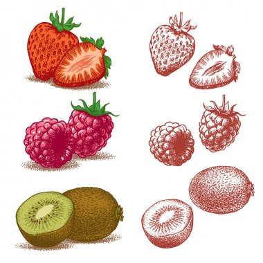 Strawberry, raspberry, kiwi. Vector illustration.