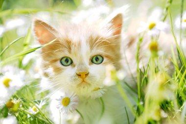 Cute little cat in green grass