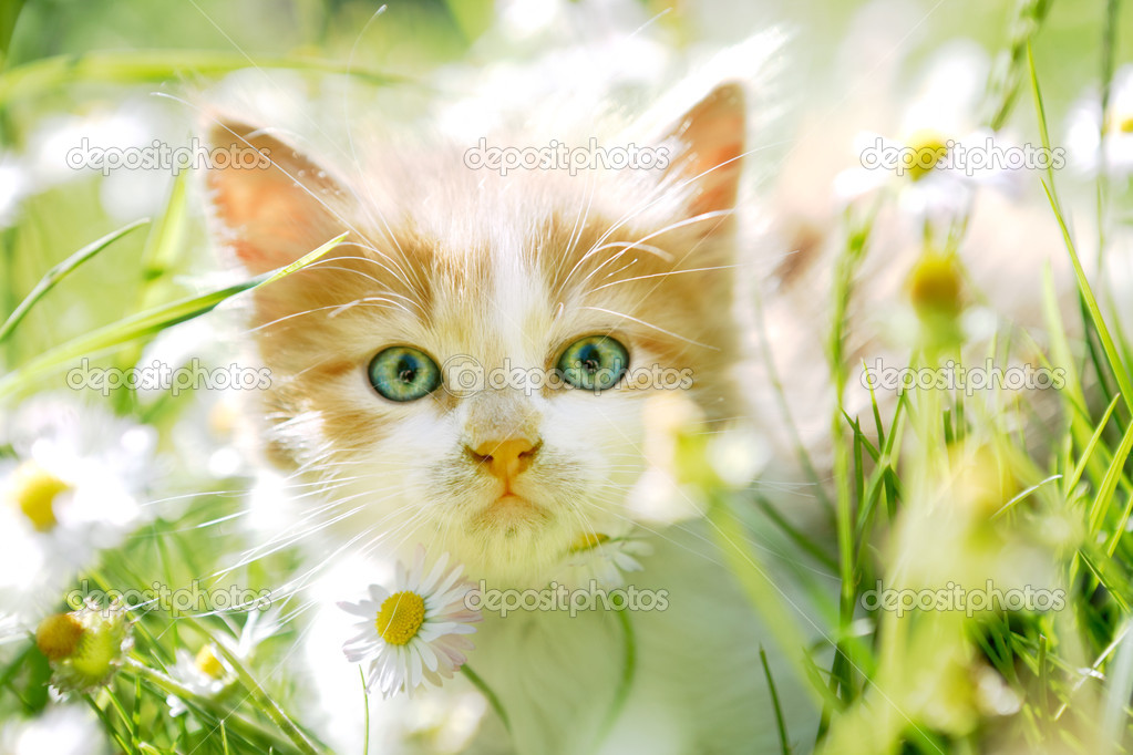Cute little cat in green grass