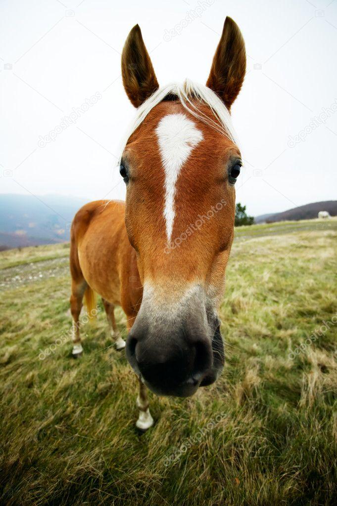 Funny Horse Head Portrait Stock Photo C Mazzachi 9148653