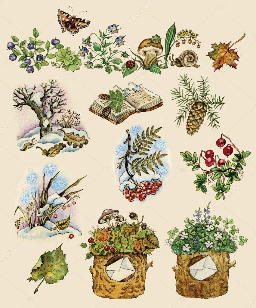 Forest set of natural images