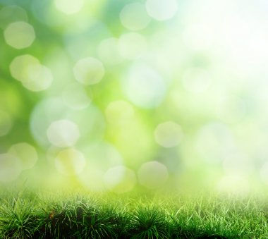 The beautiful backdrop of grass on the background bokeh stock vector