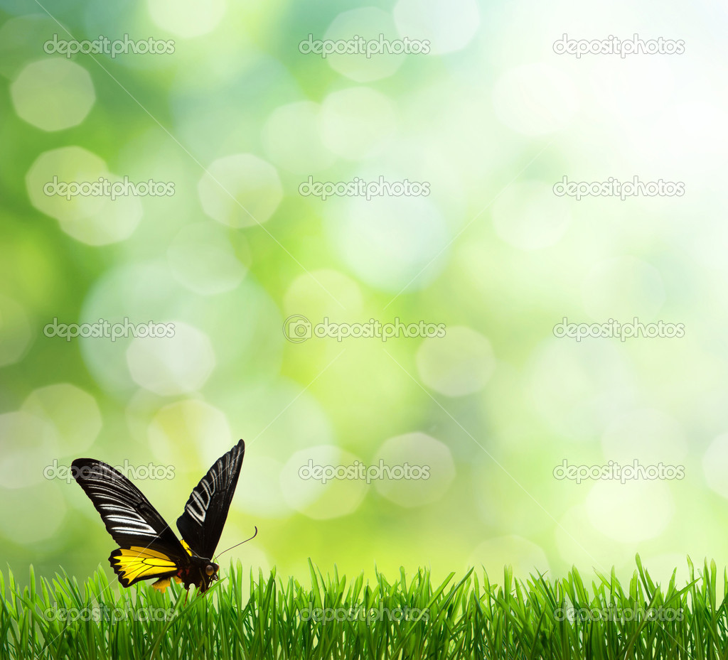 Spring background. butterfly
