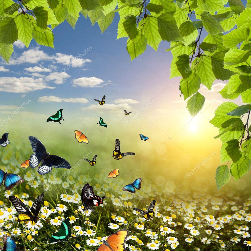 Butterfly on a daisy field
