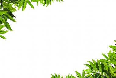 Natural green leaf frame