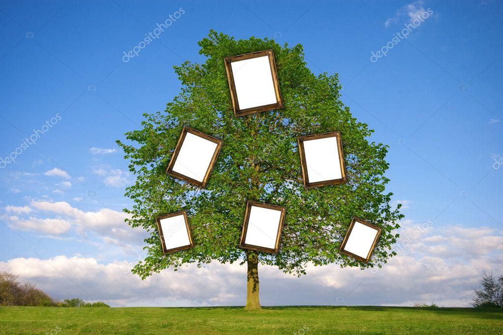 árbol genealógico — Foto de stock © andyb1126 #9190389
