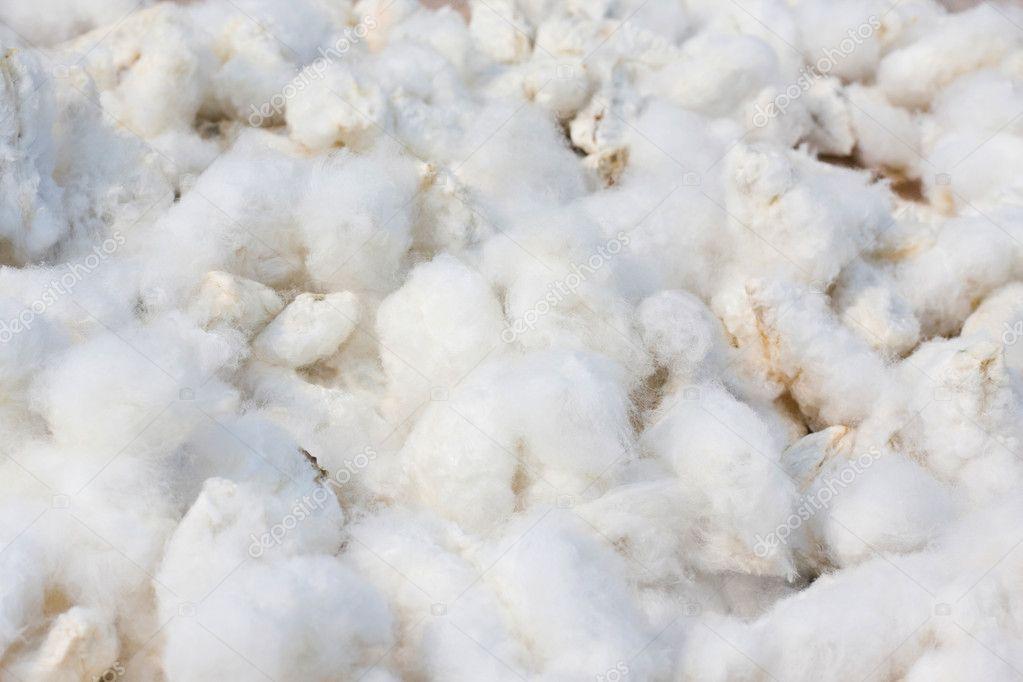cotton culin plan ahead - 800×534