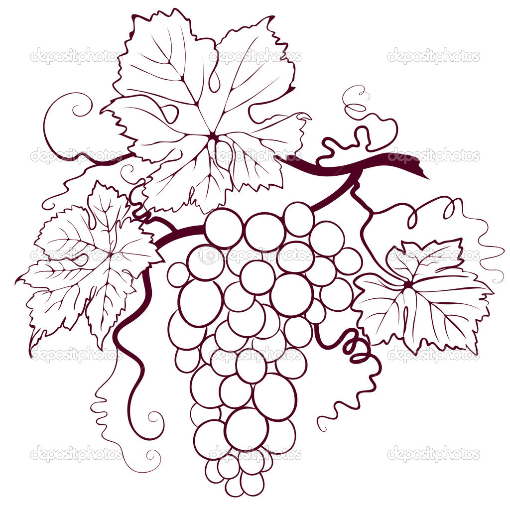 Grapes With Leaves Vector Image By C Jullands Vector Stock 9325776