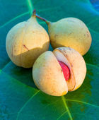 Close up image of nutmeg