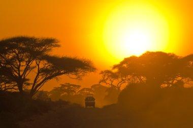 Safari jeep driving through savannah in the sunset stock vector