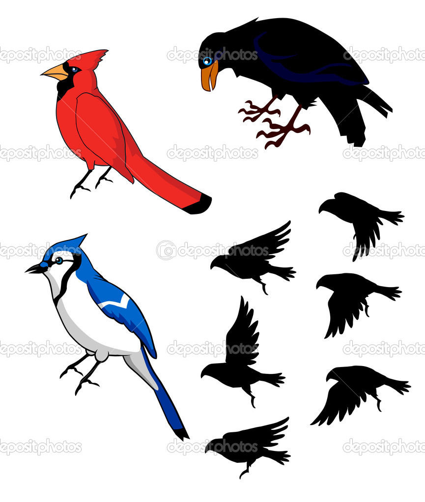 birds bluebird raven cardinal u2014 stock vector kk inc 10460421