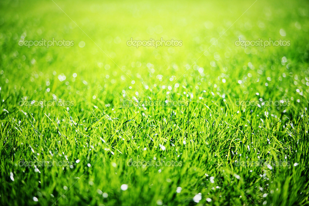 Close up of green grass.