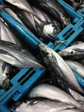 Fresh sea fishes in boxes