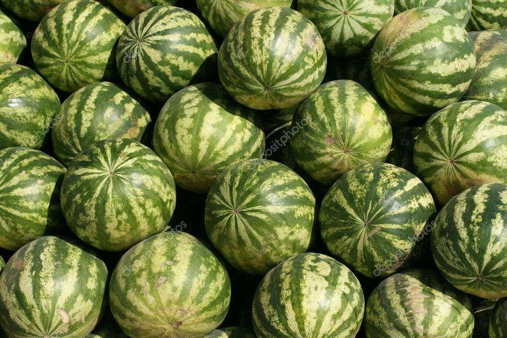 Reife große Melonen