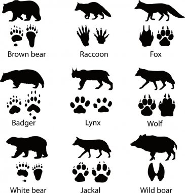 Animals and its tracks. Vector illustration