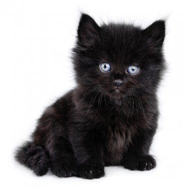 Black little kitten sitting down