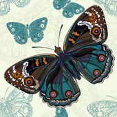 Fotografie Beautiful butterfly on a seamless background in vector