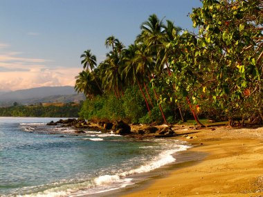 Jungle on the beach