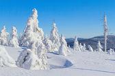 zimní pohled na sněhu které hory a stromy