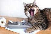 Cat near calculator