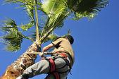 Stromový chirurg při práci na Palmu