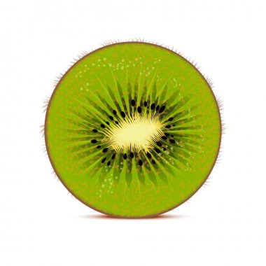 Kiwi vector illustration