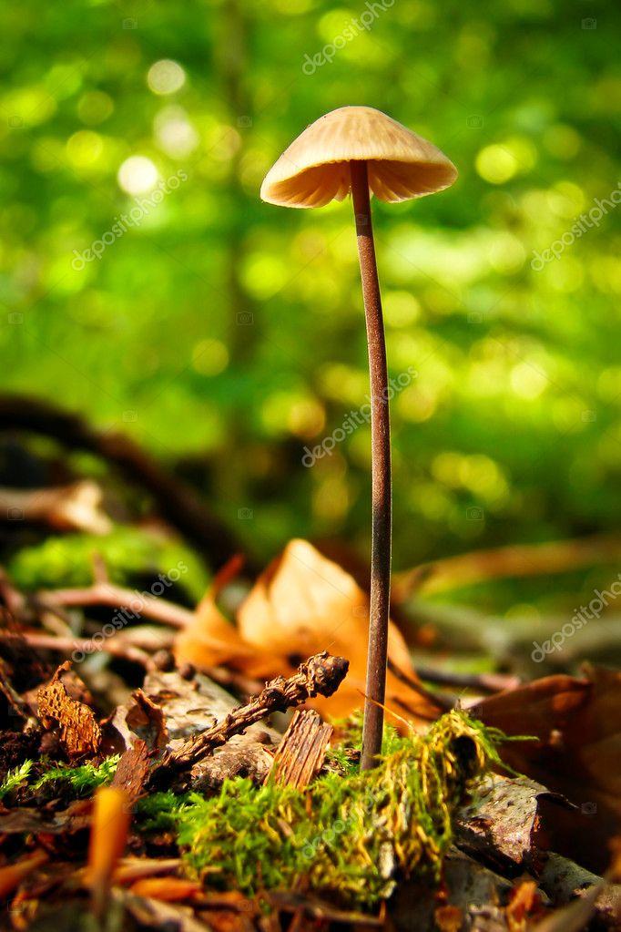 Грибы в лесу — Стоковое фото © michal.bellan #10456683