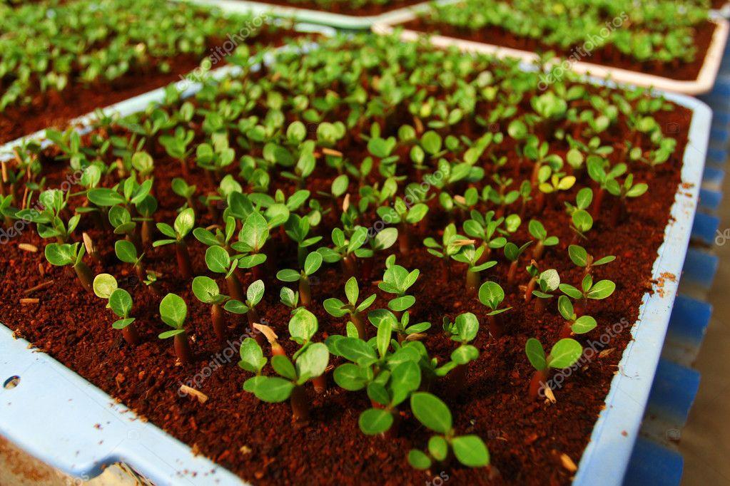 Seedlings of the flowers in Convert