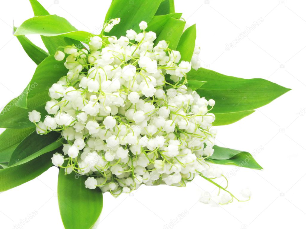 Bouquet of white lily of the valley