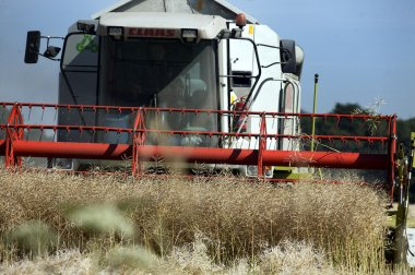 Harvest oil rape seed