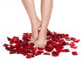 Fotografie zdravá žena nohy a nad bílou růží