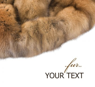 Luxury Fur. Russian Sable Isolated On White