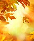 Fotografie Autumn