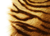 Fotografie Tiger Skin Over White