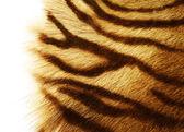 Fotografia pelle di tigre sopra bianco