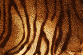 Fotografia trama di tigre