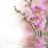 Fotografie krásné orchideje ve vodě