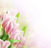 tulipány jarní hranice designu