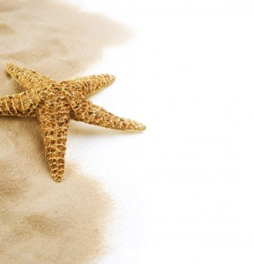 Starfish on the Sand border design. Isolated on white. Vacation