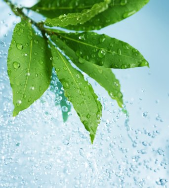 Beautiful Fresh Leaves with Water drops stock vector