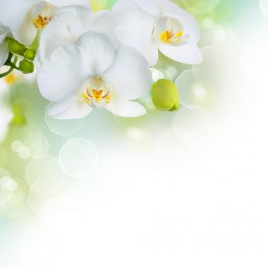 Beautiful White Orchids