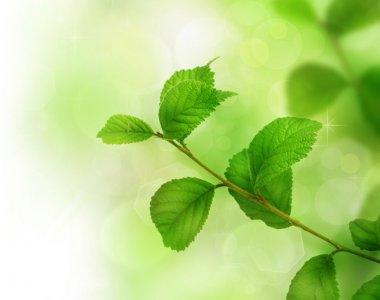 Spring Green Leaves stock vector